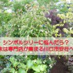 シンボルツリーに悩んだら?週末は庭木専門店が集まる川口市安行へ!