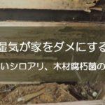湿気が家をダメにする!怖いシロアリや木材腐朽菌の話