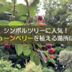 【ジューンベリー】シンボルツリーに人気!図鑑には載っていない植え場所指南!