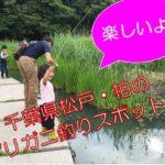 【松戸・柏子どもの遊び場】ザリガニ釣りが出来る!お出掛けスポット3選!