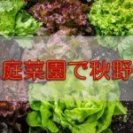 【家計節約】家庭菜園初心者さんにおすすめの簡単にできる秋野菜は?